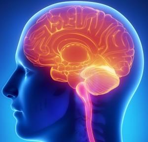 7200596-brain-food-2